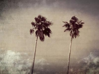 Palms tampa