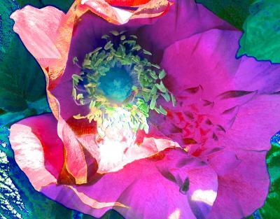 Floral Composition #2